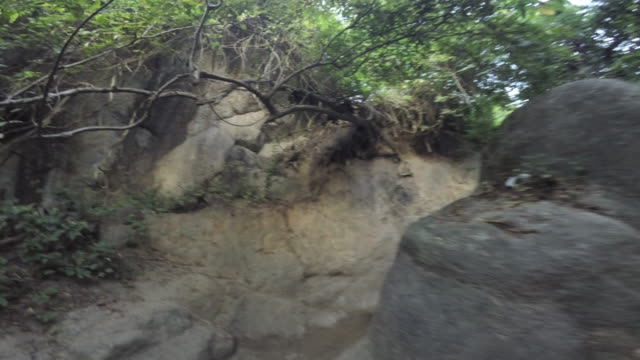 POV GoPro shot of an anonymous person hiking the Amazon Jungle