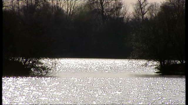 Gordon Brown delivers his eleventh budget Sunshine reflecting off lake Ducks along in water