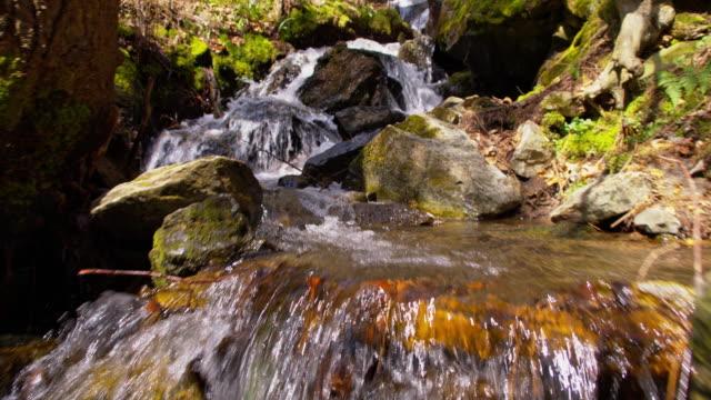 vidéos et rushes de gorge du slo, dans le missouri, avec un ruisseau qui la traverse - mousse végétale