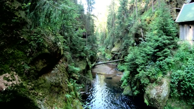 gorge with mountain forest and sandstone rocks - sandstone stock videos & royalty-free footage