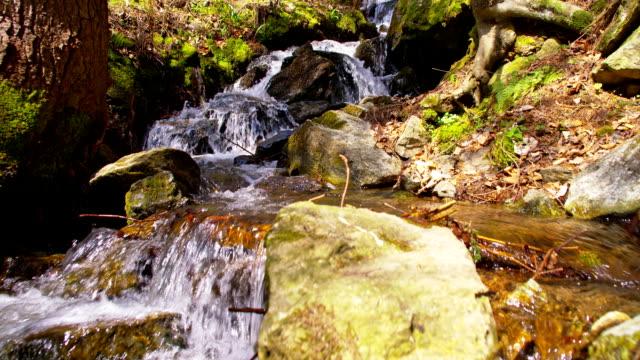 vidéos et rushes de slo, dans le missouri, avec des rapides de la gorge du ruisseau qui la traverse - mousse végétale