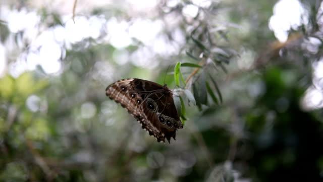 Prachtige bruine vlinder
