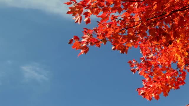 Gorgeous Fall Foliage Against Deep Blue Sky