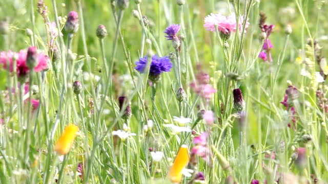 Wunderschöne Blumen in der Wildnis