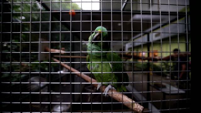 Prachtige groene papegaai