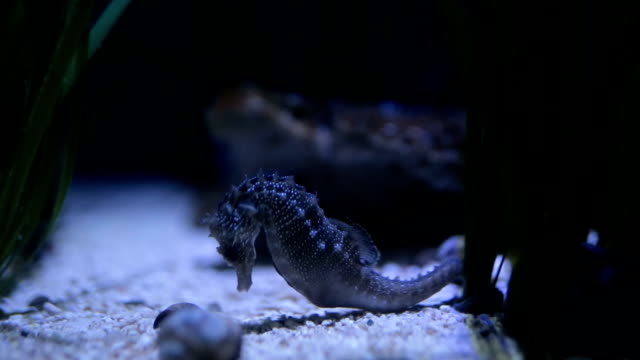 Gorgeous sea horse