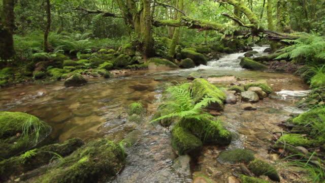 vídeos y material grabado en eventos de stock de gorgua river and waterfall, forest in galicia, spain. - galicia