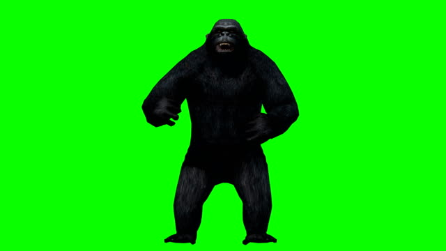 gorilla angry green screen (loopable) - animal hair video stock e b–roll