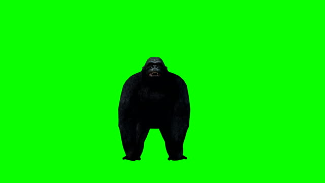 gorilla attack green screen (loopable) - green background stock videos and b-roll footage