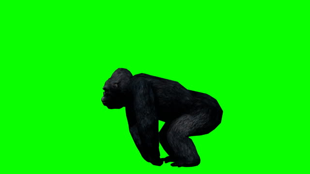 gorilla attack green screen (loopable) - monkey stock videos and b-roll footage