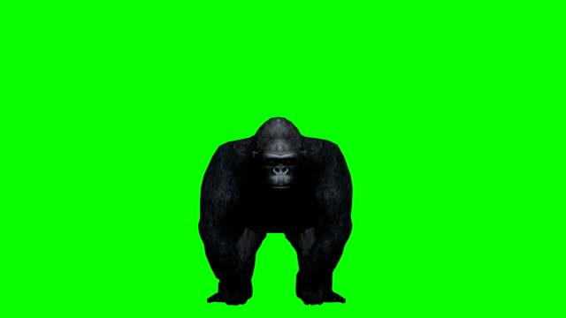 vídeos de stock, filmes e b-roll de gorila ataque verde da tela (loopable) - efeito especial