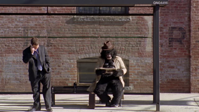 gorilla in trenchcoat reading newspaper in bus stop / businessman talking on cell phone walking up to bus stop / traffic passing in foreground / new york city - bus stop stock videos & royalty-free footage