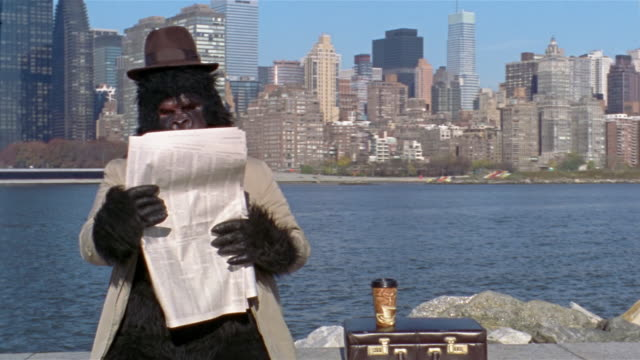 Gorilla in trenchcoat reading newspaper on bank of East River with view of Manhattan skyline across water / frustratedly throwing paper down and pounding chest / Long Island City, Queens, New York City