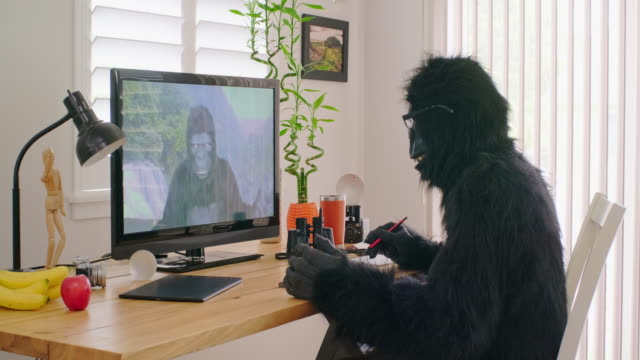 gorilla online videoconference - costume stock videos & royalty-free footage