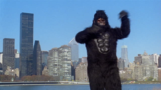 Gorilla pounding chest and shaking fists on bank of East River with view of midtown Manhttan skyline across water / Long Island City, Queens, New York City
