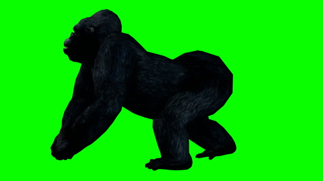 Gorilla Running Green Screen (Loopable)