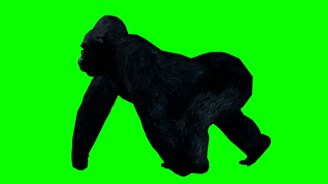 gorilla walking green screen (loopable) - monkey stock videos and b-roll footage