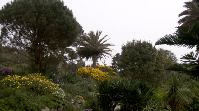 gorse colors the landscape at tresco abbey gardens, isles of scilly. available in hd. - isles of scilly stock videos & royalty-free footage