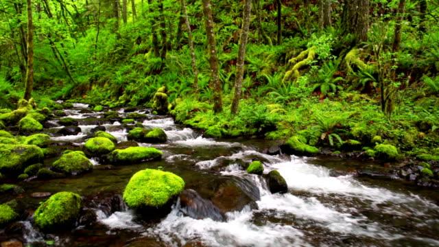 gorton creek through lush rainforest, columbia river gorge, oregon, usa - columbia river gorge stock videos & royalty-free footage