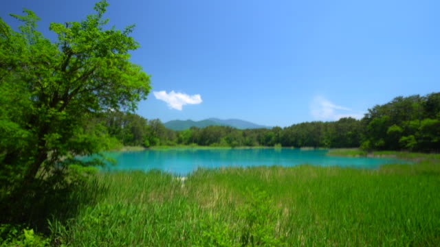 goshiki-numa, fukushima, japan - lush stock videos & royalty-free footage
