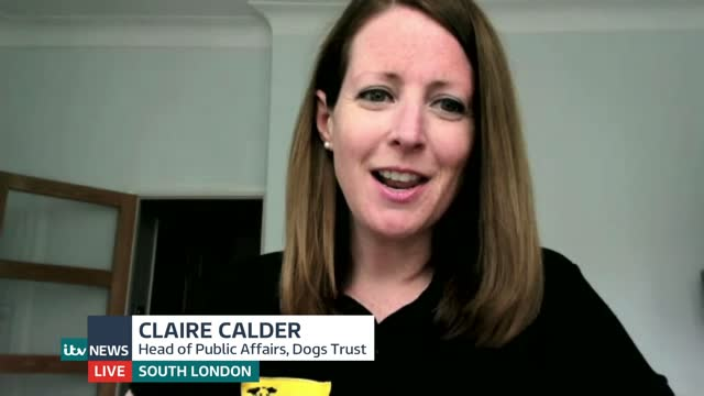 government announces new measures on pet welfare; england: london: gir: int claire calder live 2-way interview sot - politics stock videos & royalty-free footage