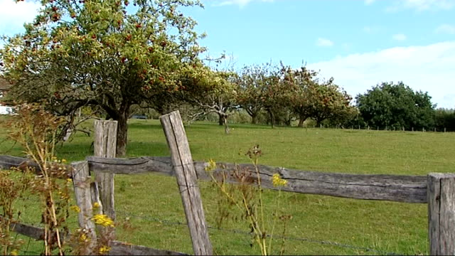 government planning law reforms attacked by national trust; ext more views of kent countryside with hedges, fields, trees in orchard, red apples on... - national trust video stock e b–roll