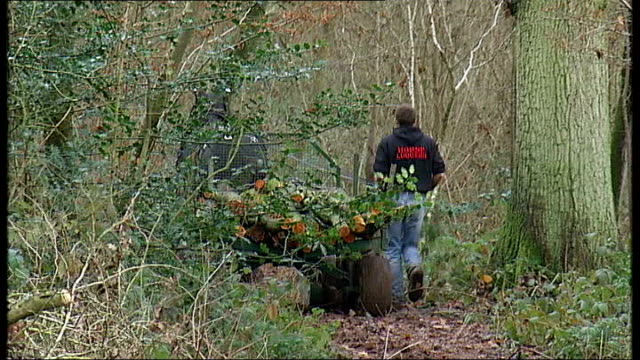 vidéos et rushes de government plans to selloff public woodland in england england ext general views of heavy horse pulling trailer through woodland area general view of... - bare tree