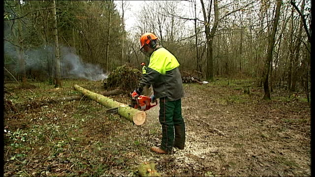 vídeos de stock, filmes e b-roll de government unveils plans to selloff public woodland in england r23011102 forestry worker cutting logs with chainsaw close shot of chainsaw cutting... - forester