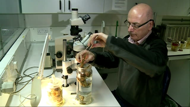 government urged to step up fight against alien species t03011435 int various of dr paul clark pulling mitten crab out of specimen jar - mitten stock videos and b-roll footage