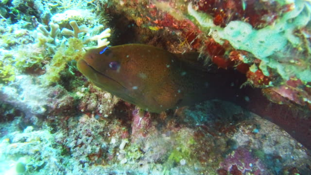 grabbing a quick bite - moray eel stock videos & royalty-free footage