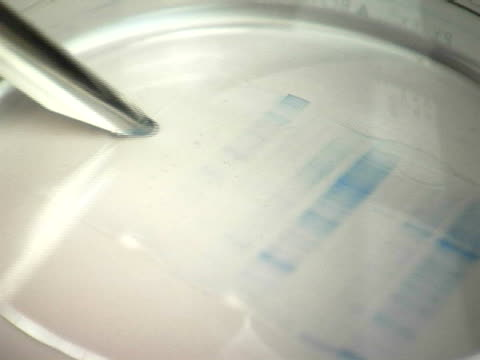 cu, grabbing biological sample with tweezers - dna test stock videos and b-roll footage