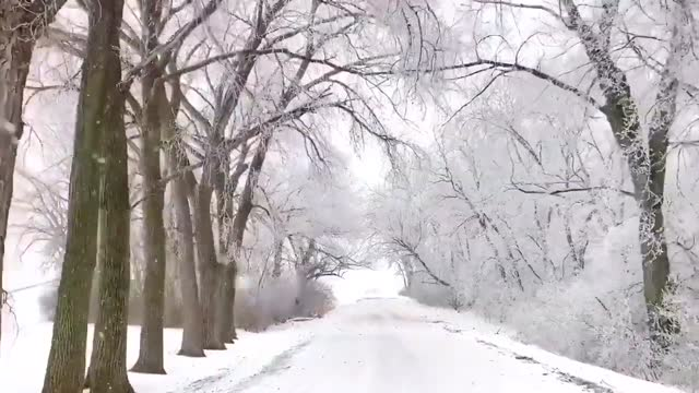 graceville, minnesota, resident carol bauer went for a drive down a tree-lined street as snow and ice fell from branches onto the road below,... - https stock-videos und b-roll-filmmaterial