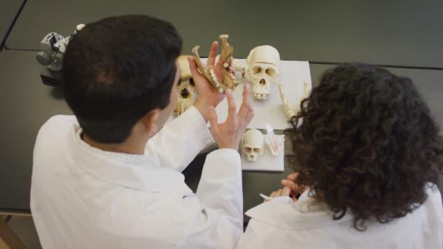 graduate students studying bones - bone stock videos & royalty-free footage