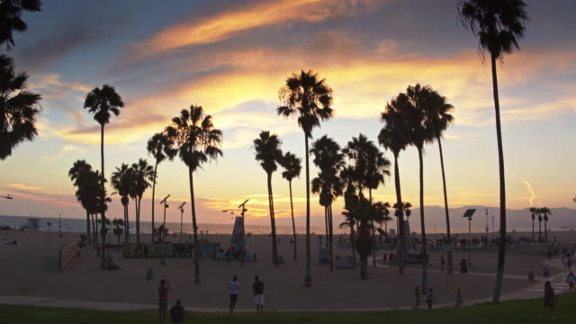 vidéos et rushes de graffiti walls and skate park on venice beach - drone shot - californie
