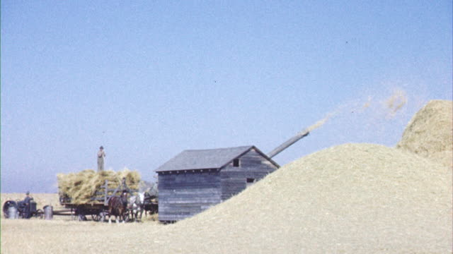 ms grain being thrashed / canada  - arbetsdjur bildbanksvideor och videomaterial från bakom kulisserna