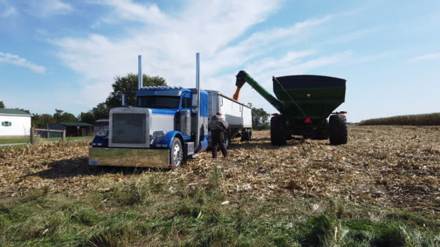 a grain cart transfers corn to a transport truck as they harvest in a field at the hansen family farms on october 12 2019 in baxter iowa the 2020... - grain cart stock videos & royalty-free footage