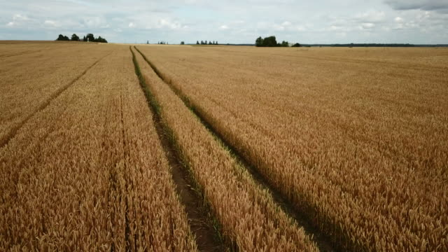 grain field - lithuania stock videos & royalty-free footage