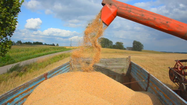 grain trailer loading - poland stock videos and b-roll footage