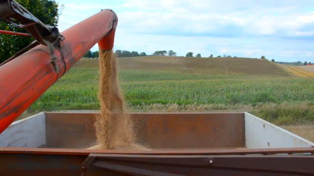 vidéos et rushes de chargement de grain remorque - silo