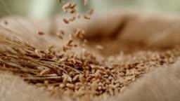 SLO MO Grains falling into sack of wheat crop