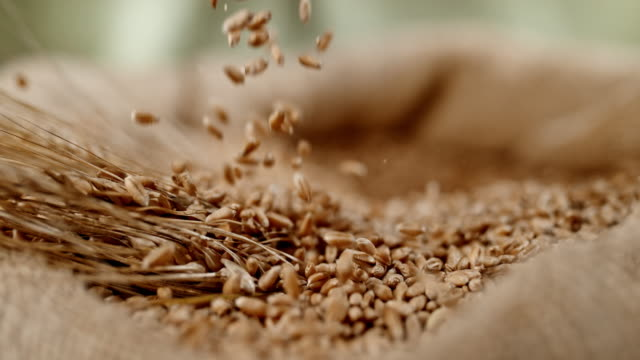 SLO MO Grains falling into sack of wheat crop
