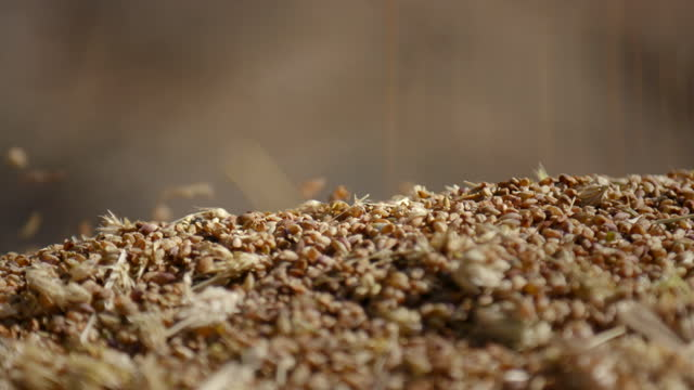 grains falling / nepal - cereal plant stock videos & royalty-free footage