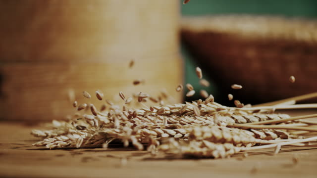 slo mo grains falling over wheat ears - cereal plant stock videos & royalty-free footage