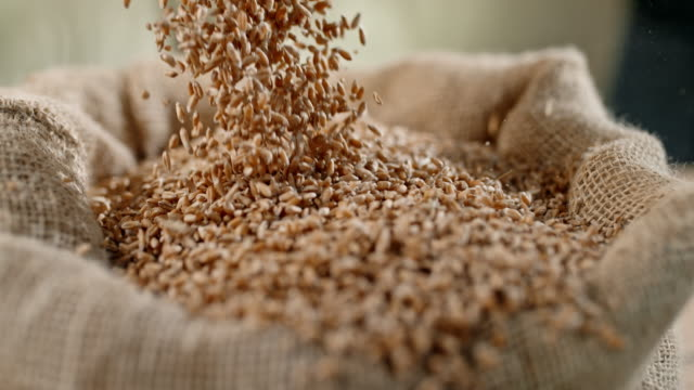 SLO MO Grains of wheat falling into a sack