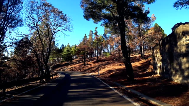 gran canaria gc130 near pico de las nieves 3 - pine woodland stock videos & royalty-free footage