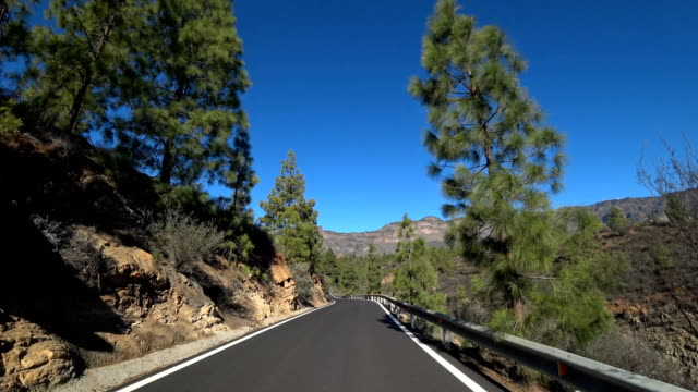 gran canaria gc60 pine trees south of san bartolome - thoroughfare stock videos & royalty-free footage
