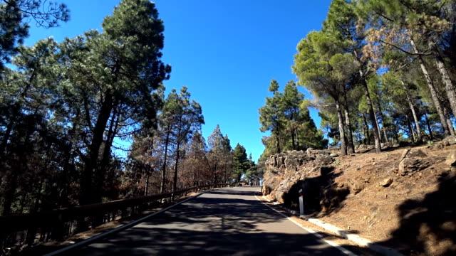 gran canaria pine trees near pico de las nieves - pine woodland stock videos & royalty-free footage
