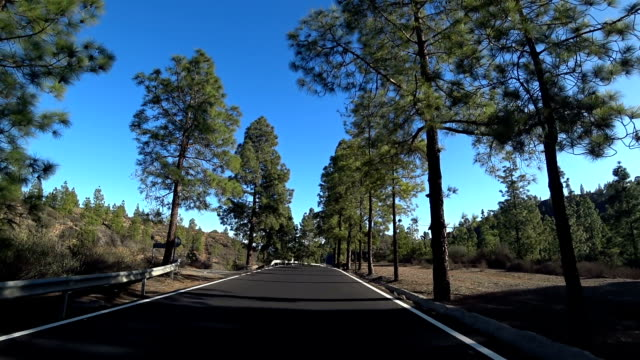 stockvideo's en b-roll-footage met gran canaria pines gc60 south of san bartolome 2 - naaldbos