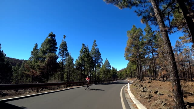 gran canaria trees after forest fire 6 - pine woodland stock videos & royalty-free footage