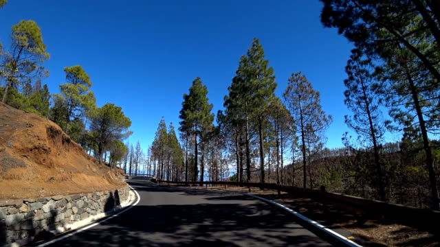 stockvideo's en b-roll-footage met gran canaria trees after forest fire 8 - naaldbos